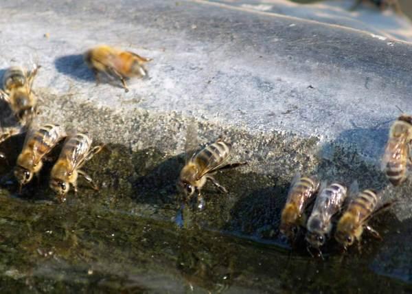 Bees 2018-07-02 2.jpg